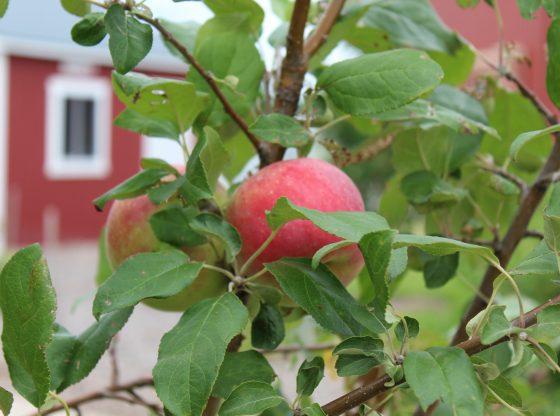 Fruit Tree at Raising Nebraska